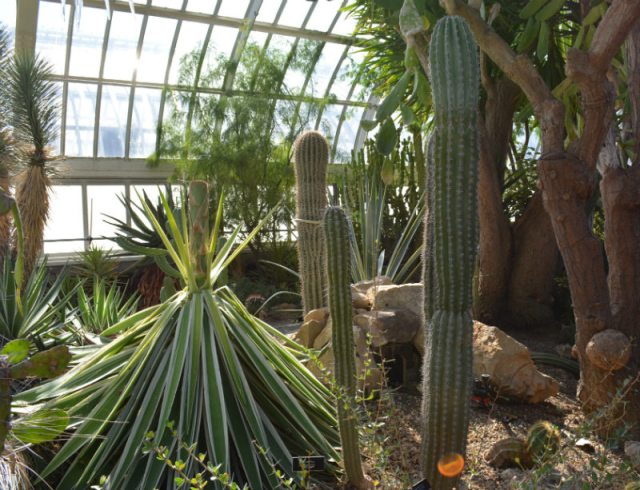 Phipps Conservatory Cactus