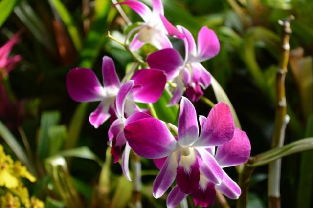 Phipps Purple Flower